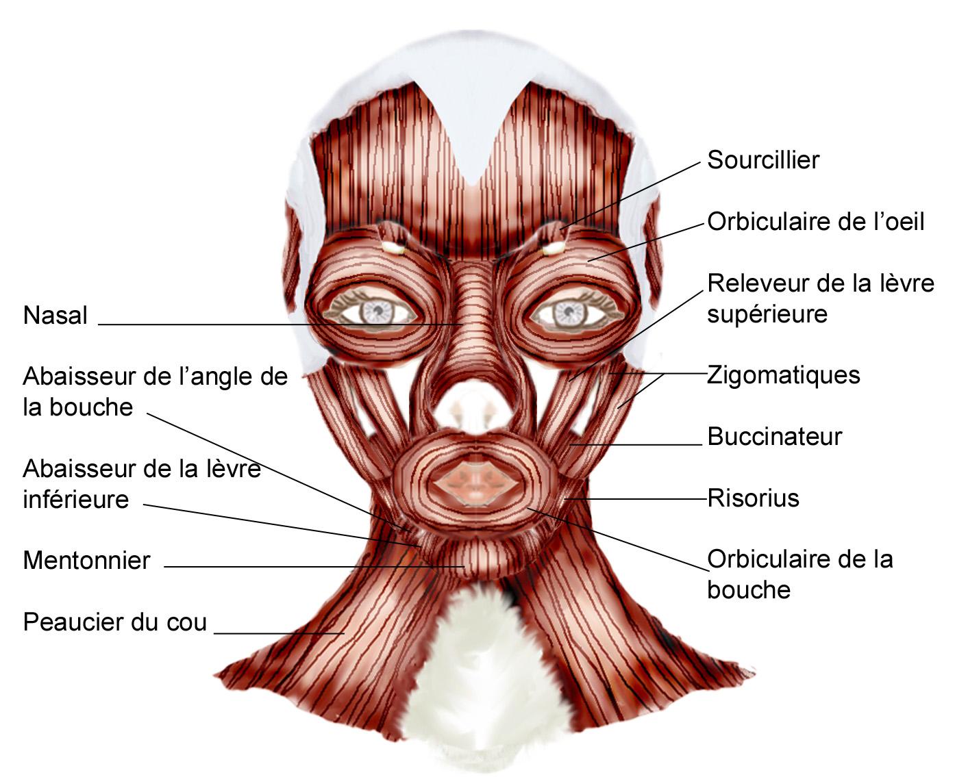 Les diffrents types de vieillissement du visage - Article